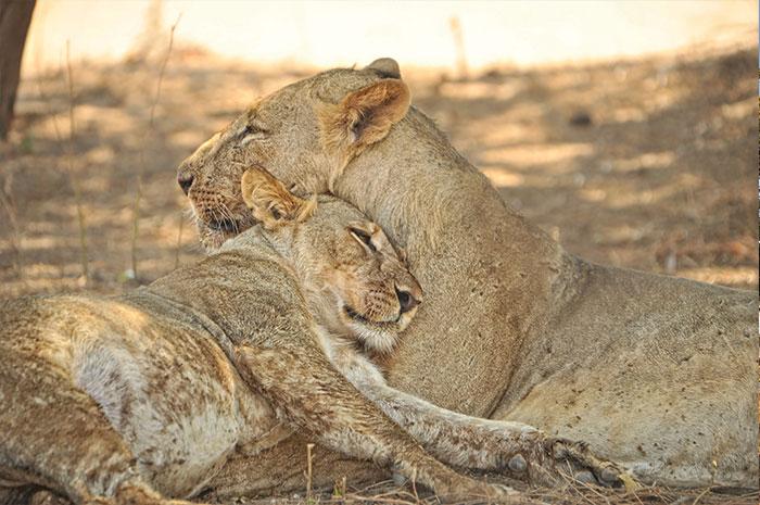 Walk don't run: Zimbabwe Safari