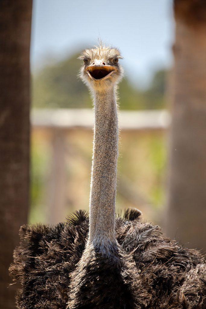 Sydney Zoo opens