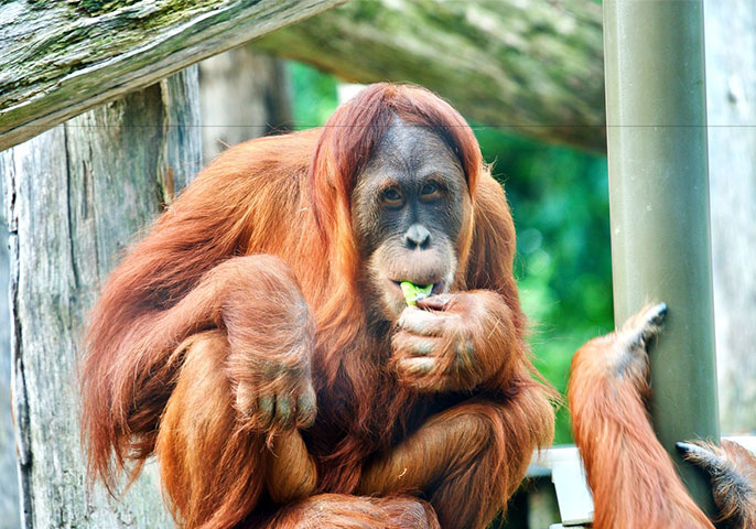 Sydney Zoo announces opening date | Vacations & Travel