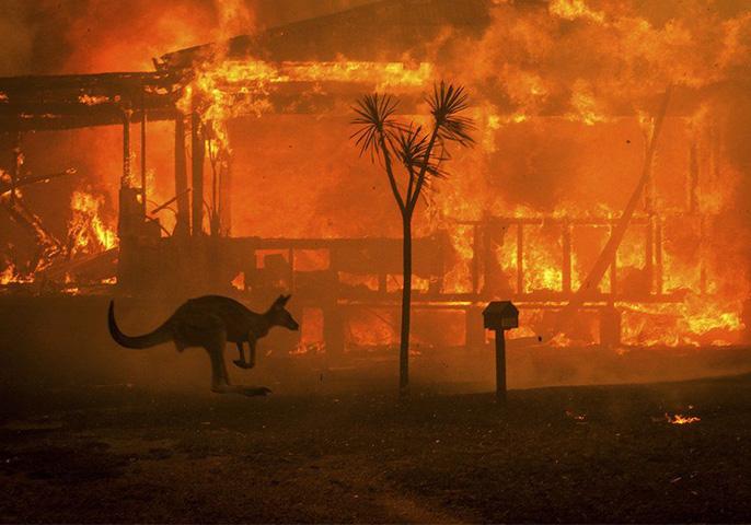 Australian Bushfires. Image: Matthew Abbott/NY Times