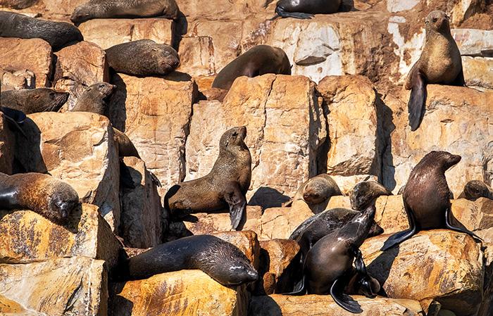 African ocean safari: the Marine Big Five