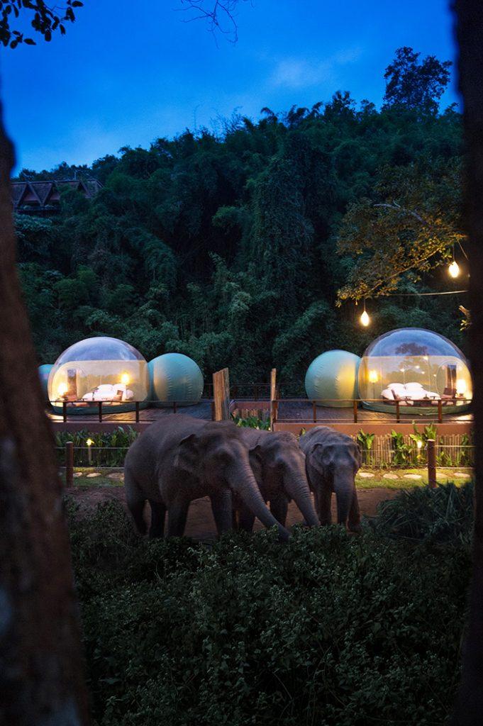 Jungle Bubbles Thailand