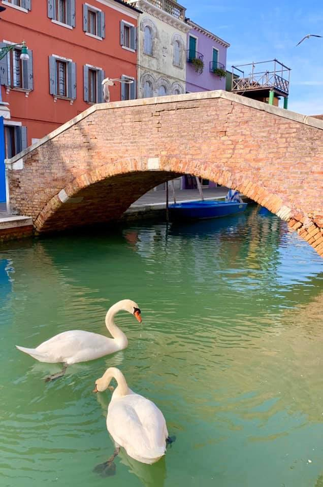 coronavirus environmental effects: Venice canals