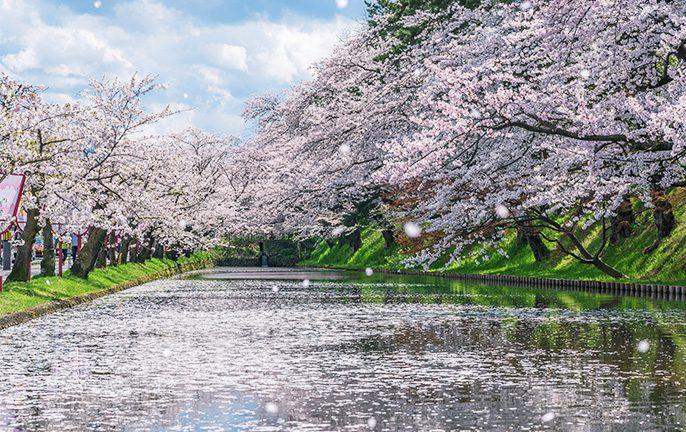 Visiting Aomori in Summer, Japan