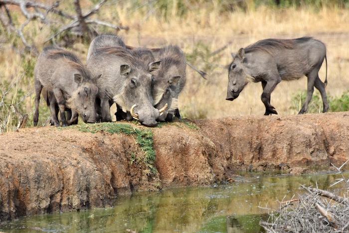 Sabi Sabi Private Game Reserve African Safari vacation