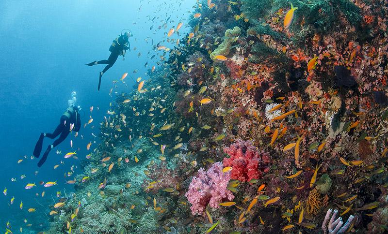 diving, Mozambique, Azura Quilalea Resort