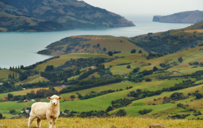 New Zealand travel: virtual experiences