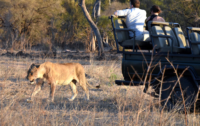 Sabi Sabi Private Game Reserve African Safari vacation