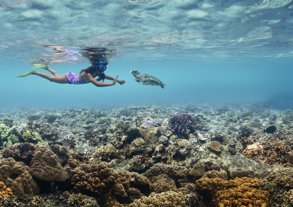 Fiji virtual travel: Meeting a sea turtle in a Fijian reef. Image: Tourism Fiji