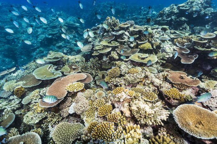 Australia natural wonders: Coral Spawning Queensland
