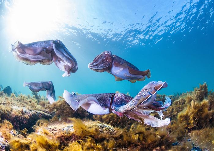 Australia natural wonders: Stony Point Eyre Peninsula