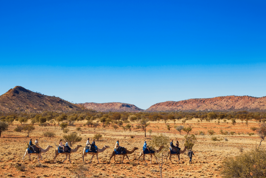 Northern Territory: Pyndan Camel Tracks Image: Tourism NT