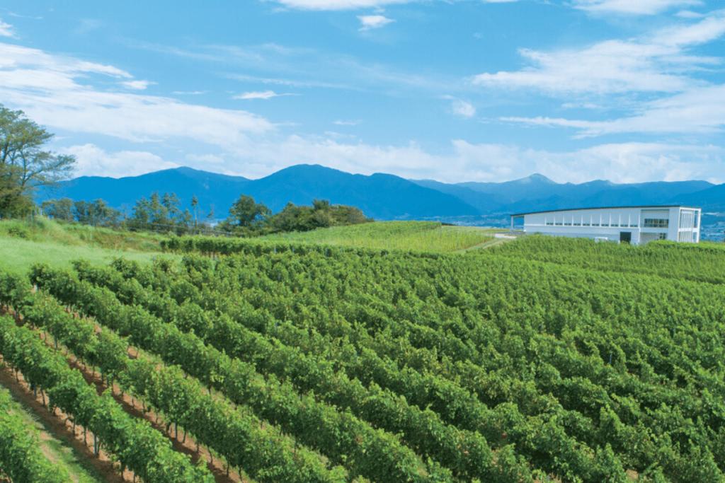 World's Best Vineyards: Château Mercian Mariko Winery, Japan. Image: World's Best Vineyards