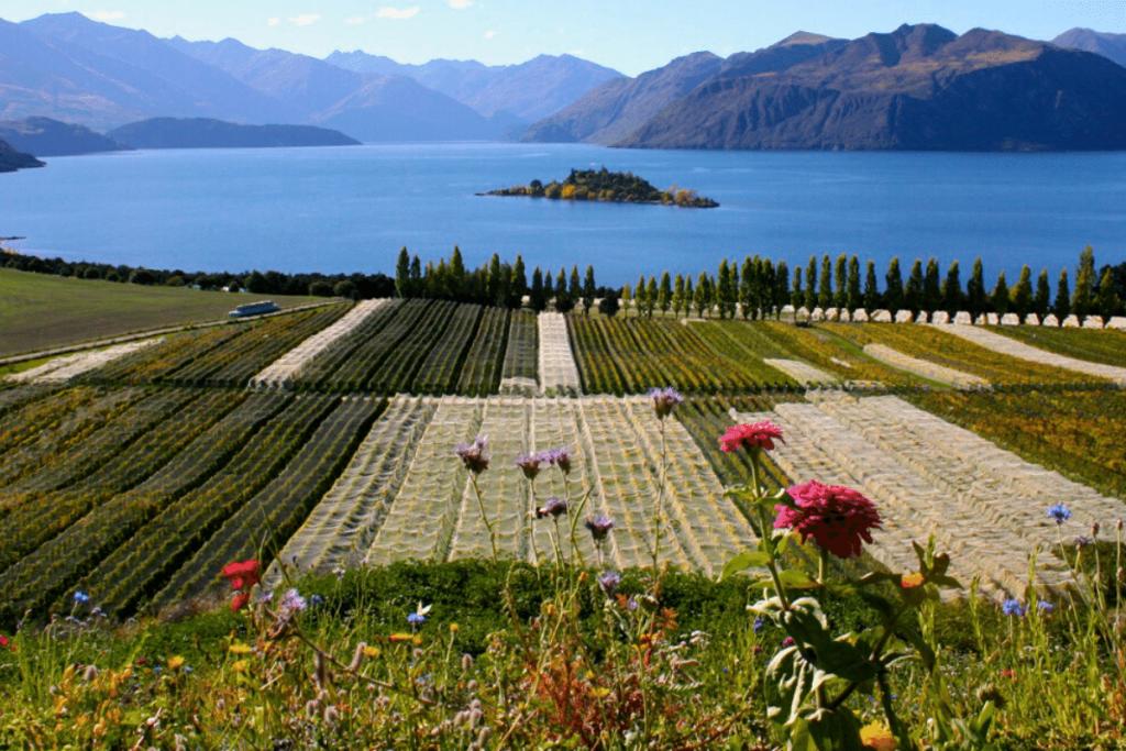 World's Best Vineyards: Rippon, New Zealand. | Image: World's Best Vineyards