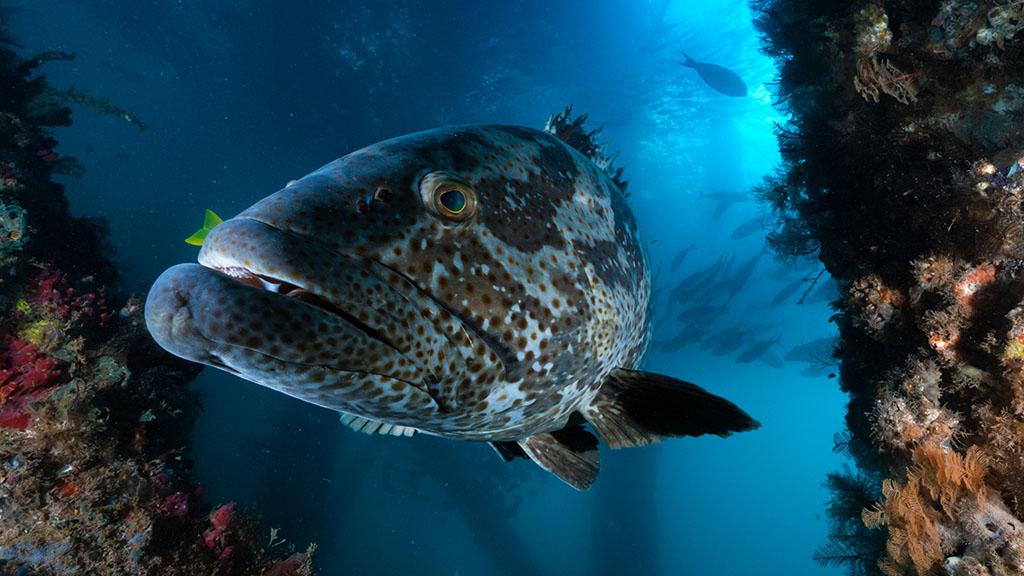 Best scuba diving holidays Australia