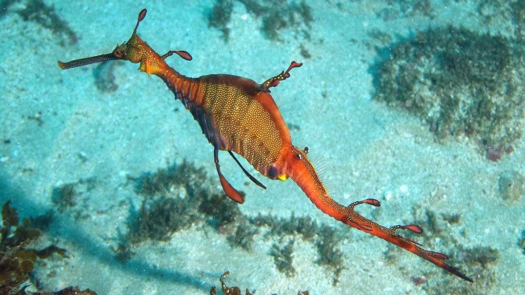 Scuba diving holidays Australia