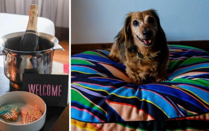 Pet friendly hotels Sydney