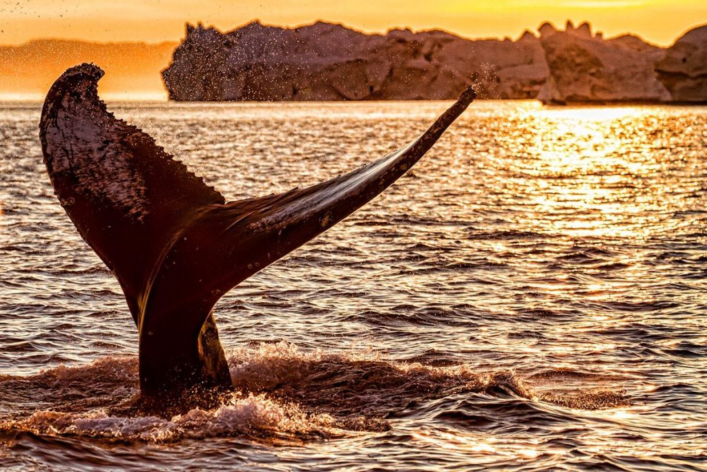 Whale spotting in Greenland