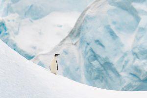 Penguins Cuverville Island, Antarctica