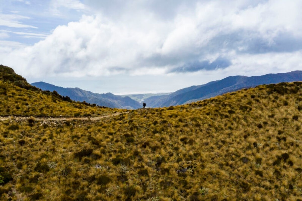 NZ new mountain bike track