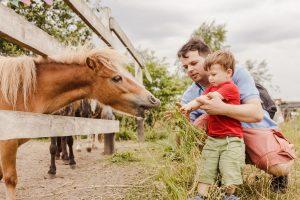 NSW farm stay