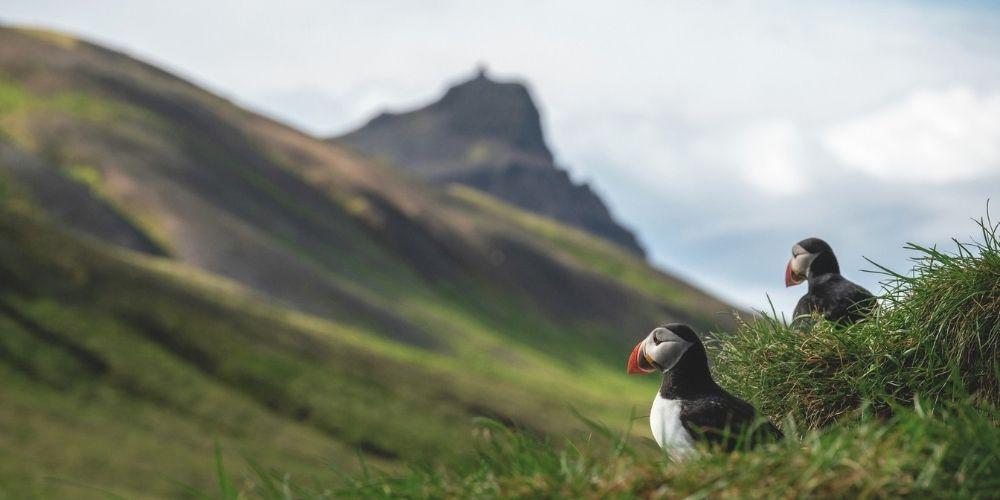 Bakkager Iceland