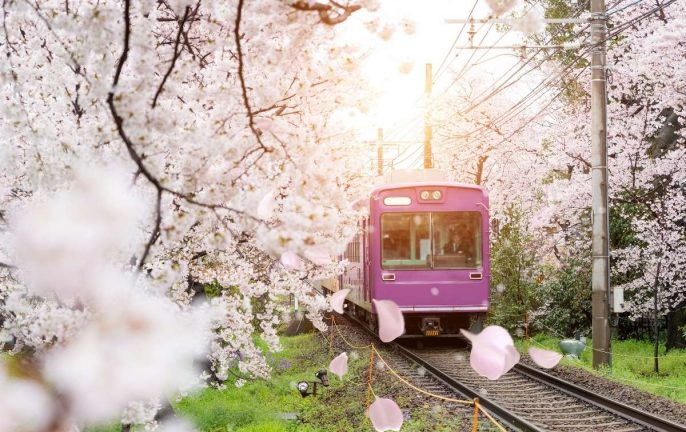 Wendy Wu Tours Fly Free to Japan offer © Canva