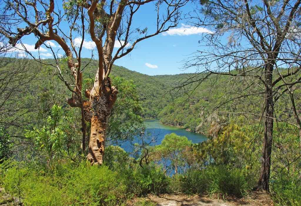 things to do in Sydney - take a hike through Ku-Ring-Gai National Park